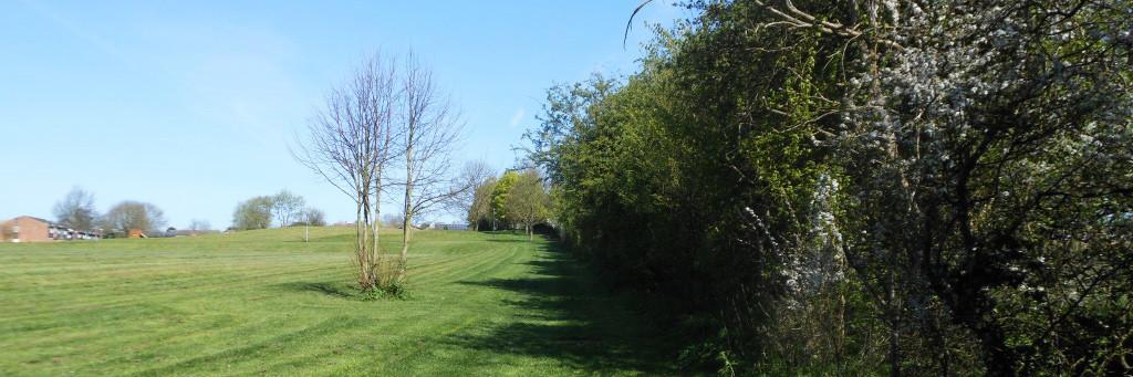 grange-field-thin